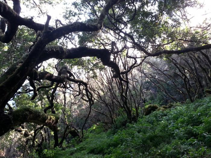 hoya del pino, el hierro