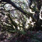 foresta della Llania, el hierro